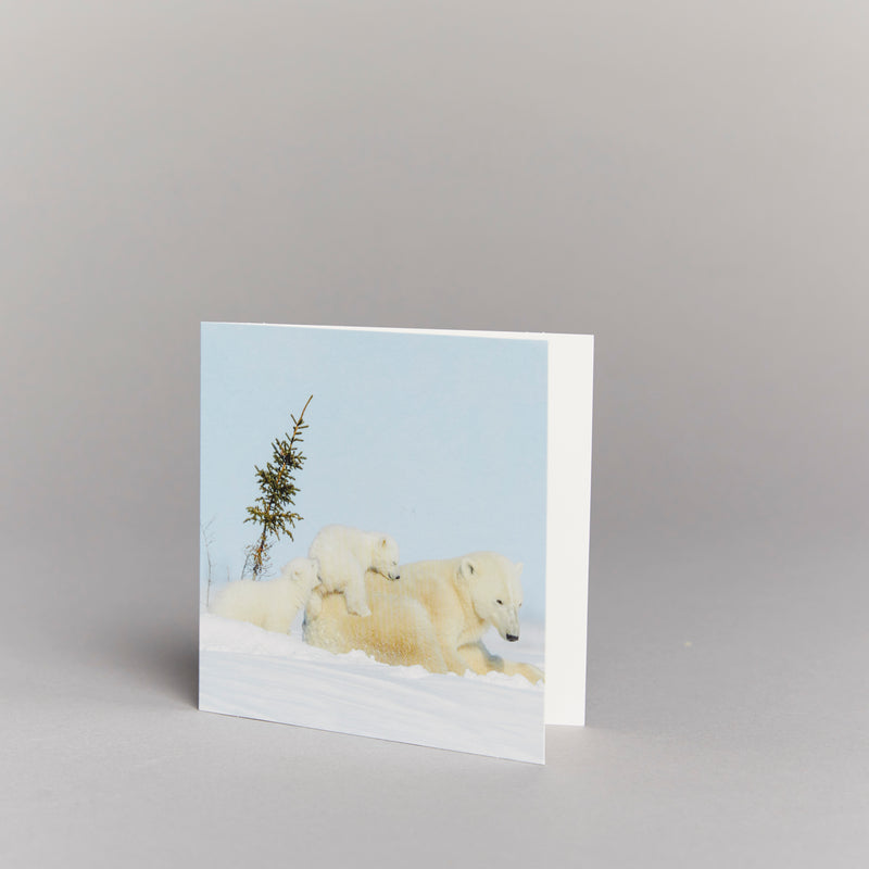 Playful Polar Bears (pack of 10) Christmas cards