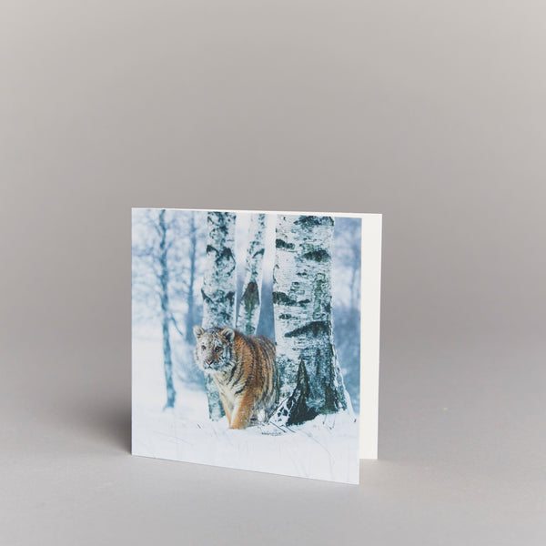 Siberian Tiger in the Forest (pack of 10) Christmas cards