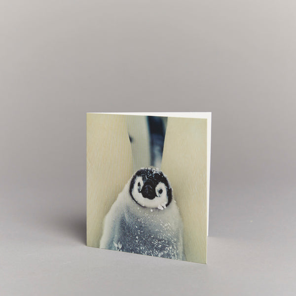 Baby Penguin (pack of 10) Christmas cards