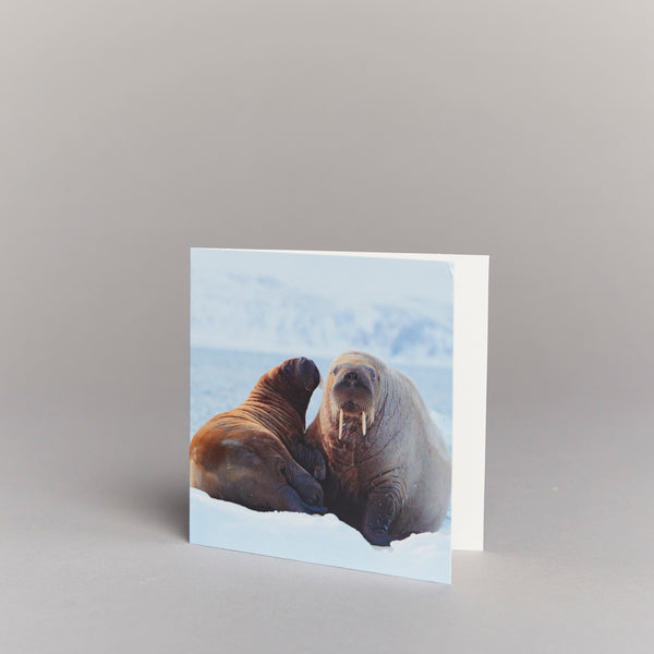 Walrus Couple (pack of 10) Christmas cards