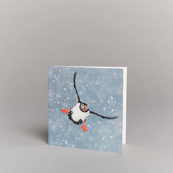 Coming In To Land (pack of 10) Christmas cards