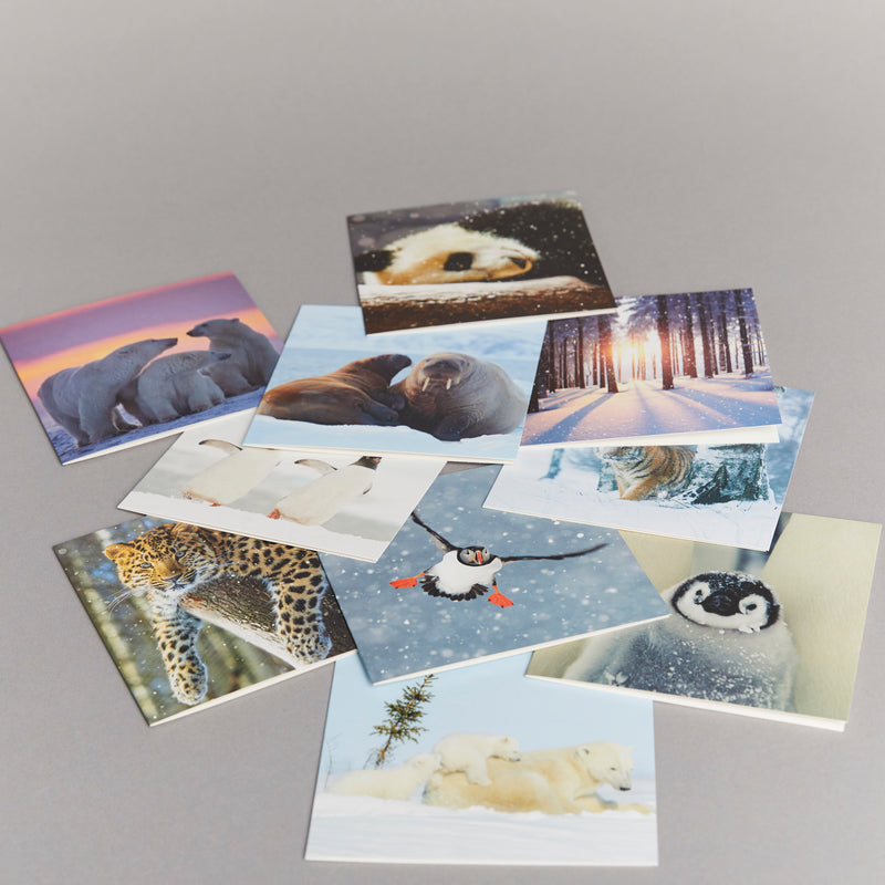 Amur Leopard (pack of 10) Christmas cards