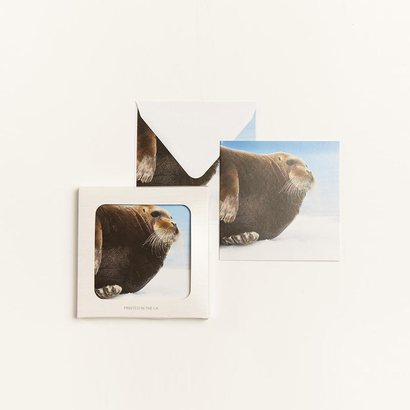 Bearded Seal (pack of 10) Christmas Cards
