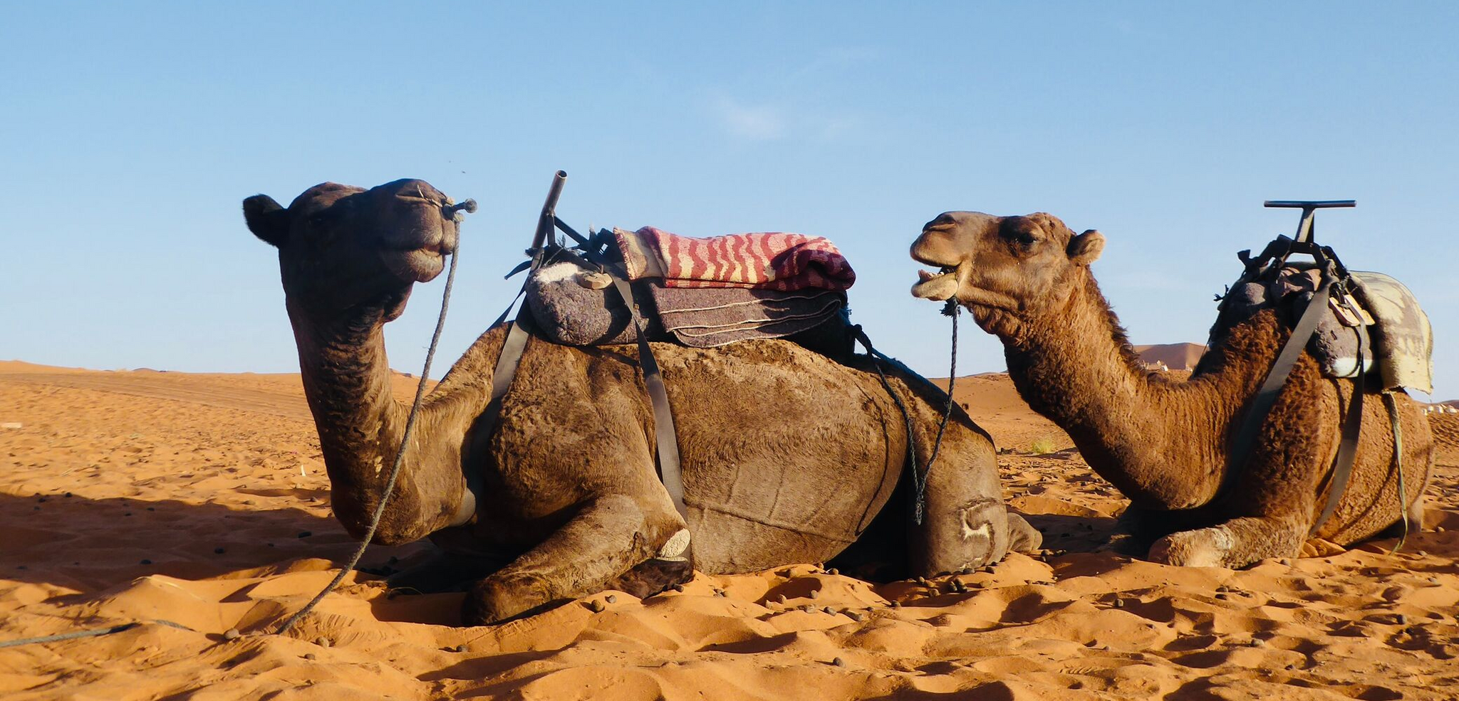 Lost Little One Travel Diaries. A guide to merzouga