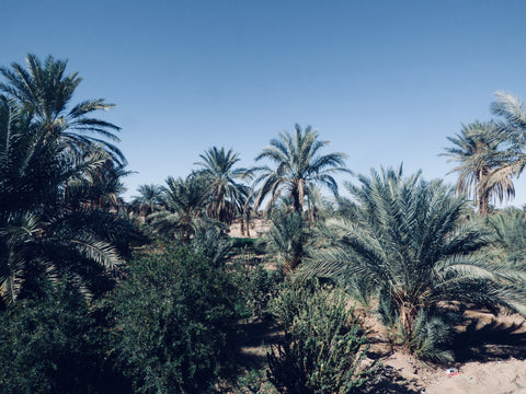 Palm Trees & Blue skies on the edge of the desert in Merzouga, Morocco