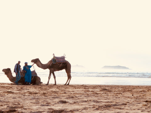 The locals in Essaouira Morocco on the beach with their beloved camels.