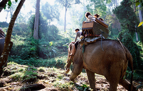 Riding Elephants in Thailand: What You Didn't Know