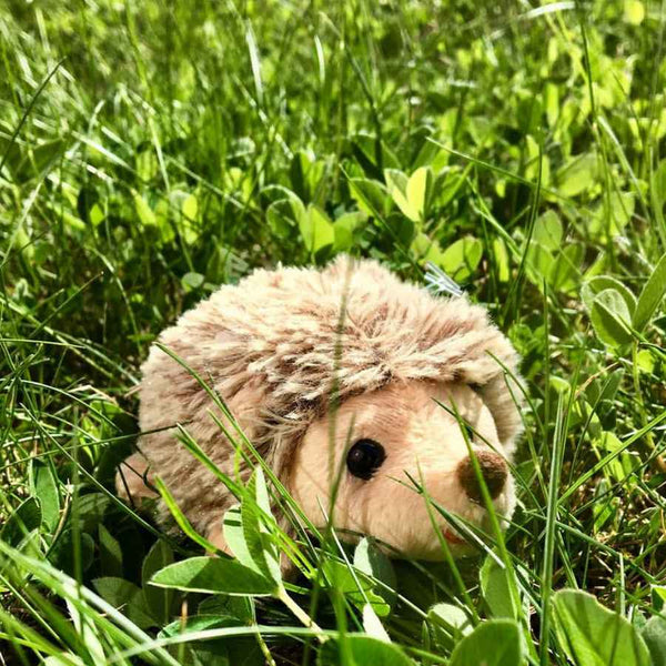 Bukowski Teddy Bears Baby Hubert Hedgehog Soft Toy outside
