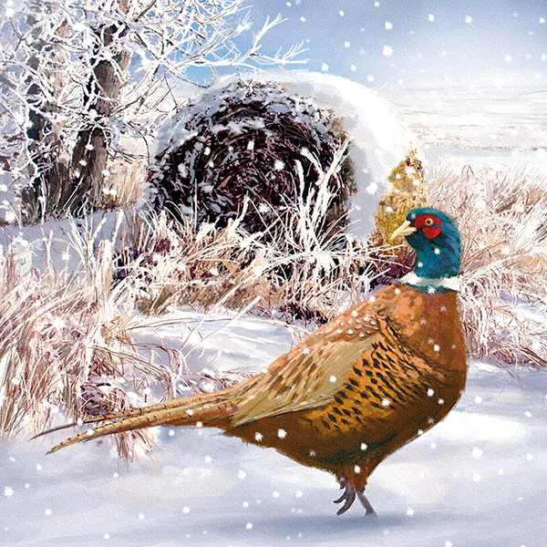Christmas Cards 6 Pack - Pheasant In Snow XP339