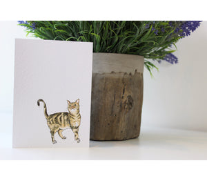 Cat | Greeting Cards | Illustrated Animals - Merri | Illustration | Stationery + Gifts | Manchester