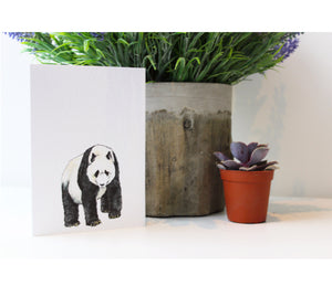 Panda Greeting Cards | Illustrated Animals
