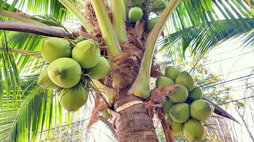 Why Coconut Carbon?