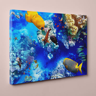 "Coral and Tropical Fish, Underwater Photo (24"" x 36"") - Canvas Wrap Print"