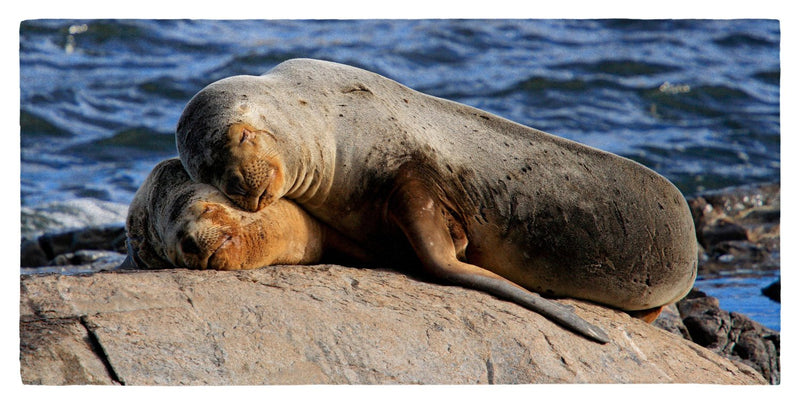 "South American Sealions Cuddling 30"" x 60"" Microfiber Beach Towel"