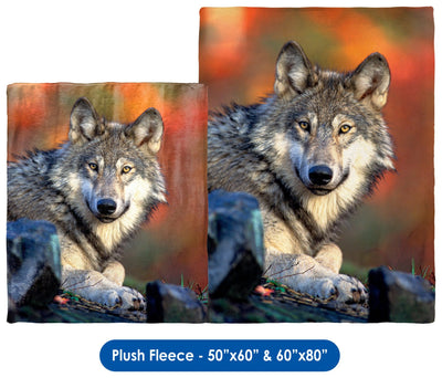 Reclining Gray Wolf - Throw Blanket / Tapestry Wall Hanging