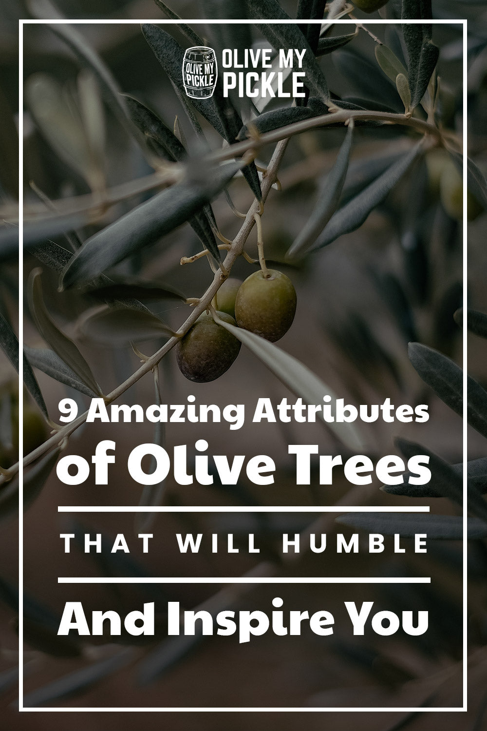 Amazing Attributes of Olive Trees