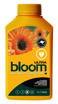 BLOOM ULTRA QT