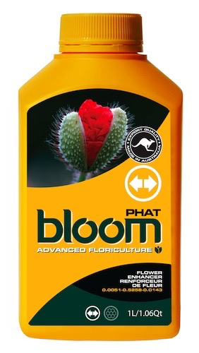 BLOOM PHAT QT