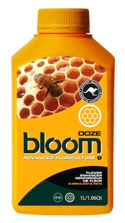 BLOOM OOZE QT