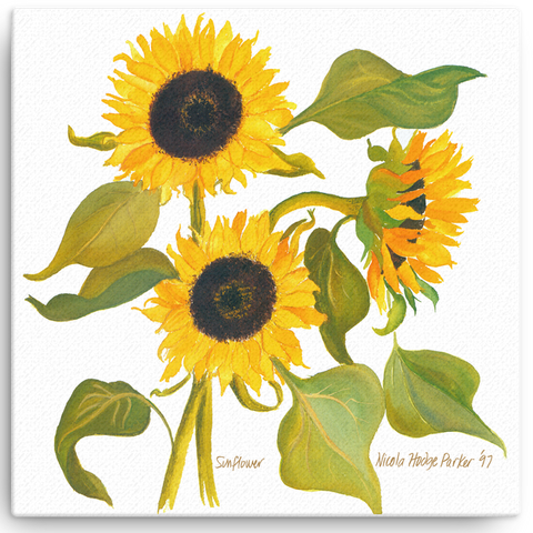Gifts for the Sunflower Lover