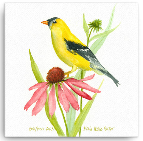 "Goldfinch 12""x12"" Print on Canvas"