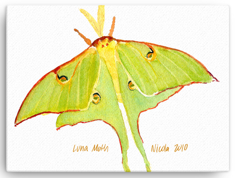 "Luna Moth 12""x16"" Print on Canvas"