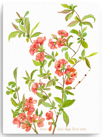 Quince Blossom Print on Canvas - several sizes