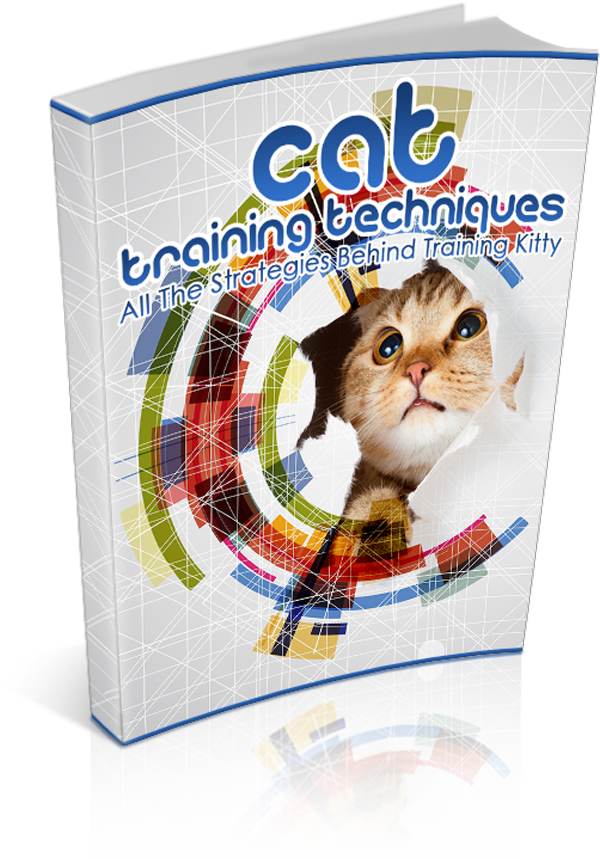 Cat Training Techniques