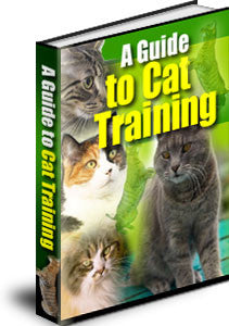 A Guide To Cat Training