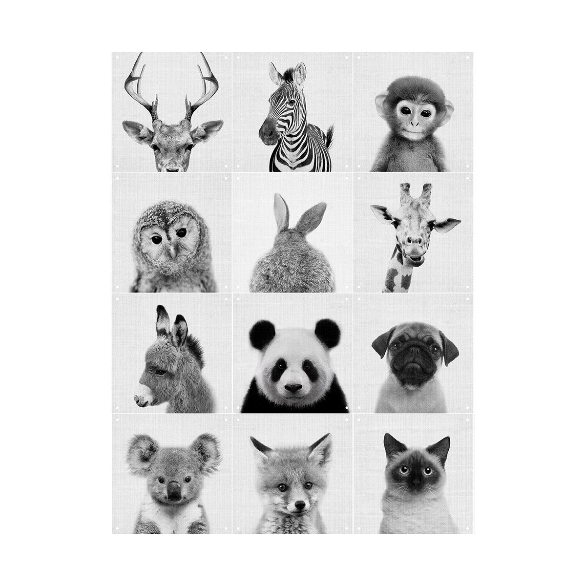 best loved fbf8c 82d43 Animal family - Lila and Lola | IXXI Wallart | Now On Sale ...