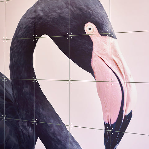 IXXI | Wall Art | Black Flamingo