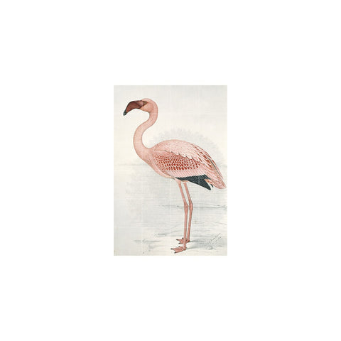 IXXI Flamingo (Finch-Davies) Wall Art