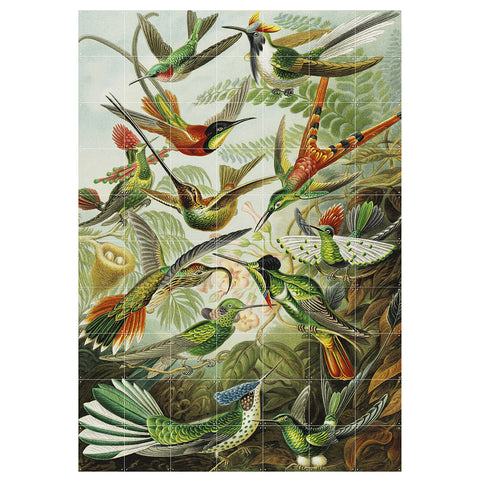 IXXI | Wall Art | Hummingbirds | Ernst Haeckel | Victoria & Albert Museum