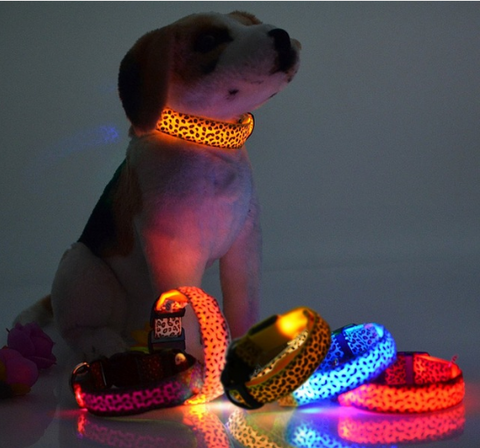 LED Dog Collars - Giveaway