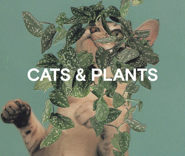 The wonderful world of Cats and Plants