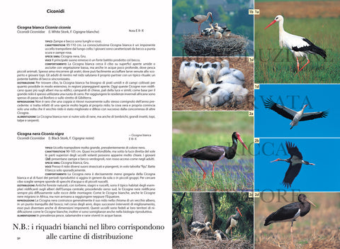Birdwatching Facile Ricca Editore Singer Cicogna bianca Cicogna nera