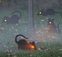 glowing eyed rats tristartents.com 10 awesome outdoor halloween party ideas