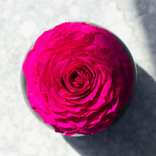 Eternal Rose (XL)