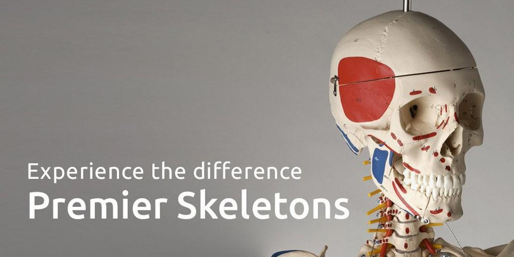 A Guide to Our Premier Skeletons Series