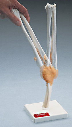 0234-83 Functional Elbow Joint Model