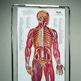 0700-00  ThinMan Sequential Human Anatomy Figure