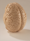 0825-60 Giant Brain, Student Edition