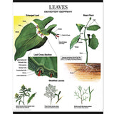 1025-13  Plant Morphology Wall Charts, Set of three