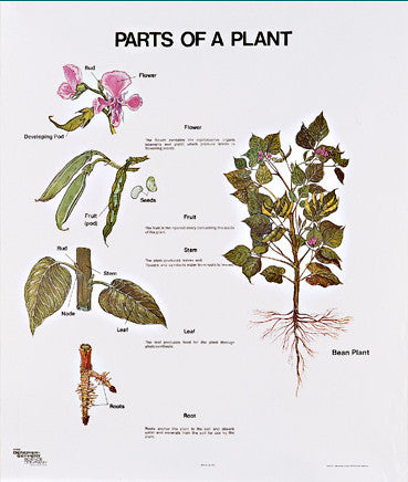 1099-10 Parts of a Plant, mounted