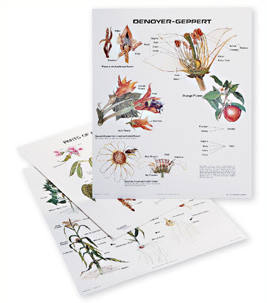 1125-13-AL Vintage Plant Growth and Development Wall Chart Set- on aluminum rod