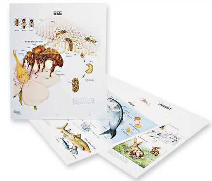 1127-13  Animal Life Histories Wall Charts, Set of three