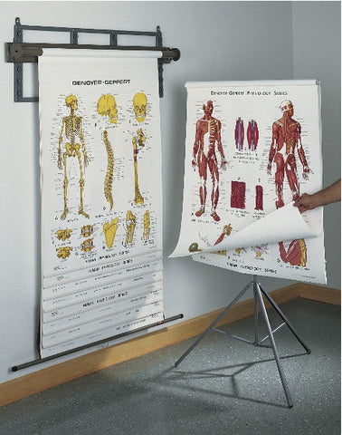 1400-41 Denoyer-Geppert's Original Anatomy & Physiology 10 Chart Set on a Tripod Stand