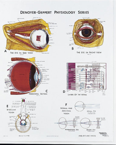 1406-10 Eye and Vision Physiology Poster mounted