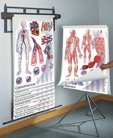 1435-41 Anatomy and Physiology 11 charts set on tripod stand