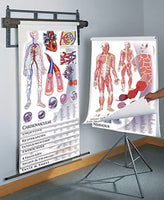 Photo of 1435-41 Anatomy and Physiology 11 charts set on tripod stand